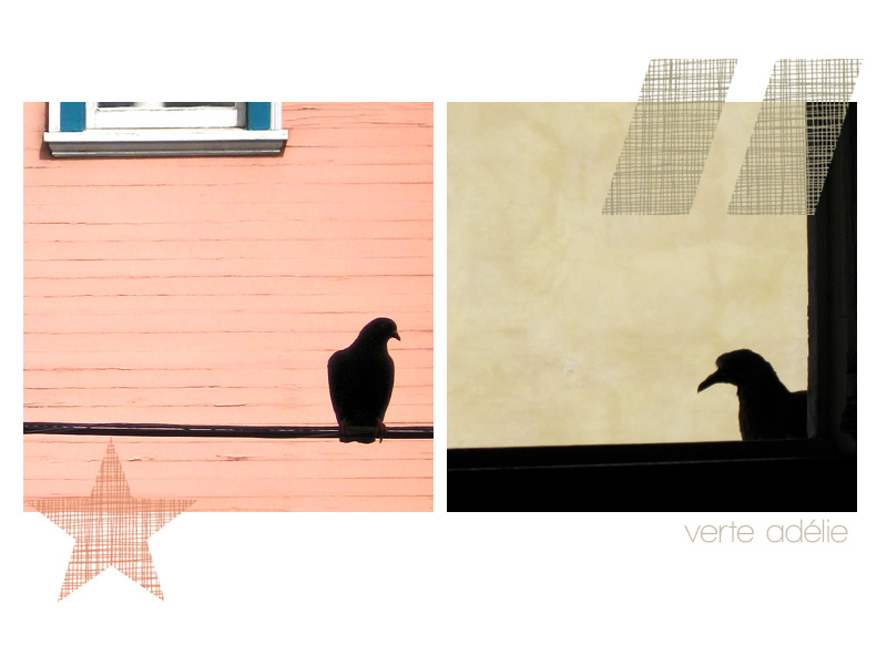 Faraway, so close: pigeon silhouettes